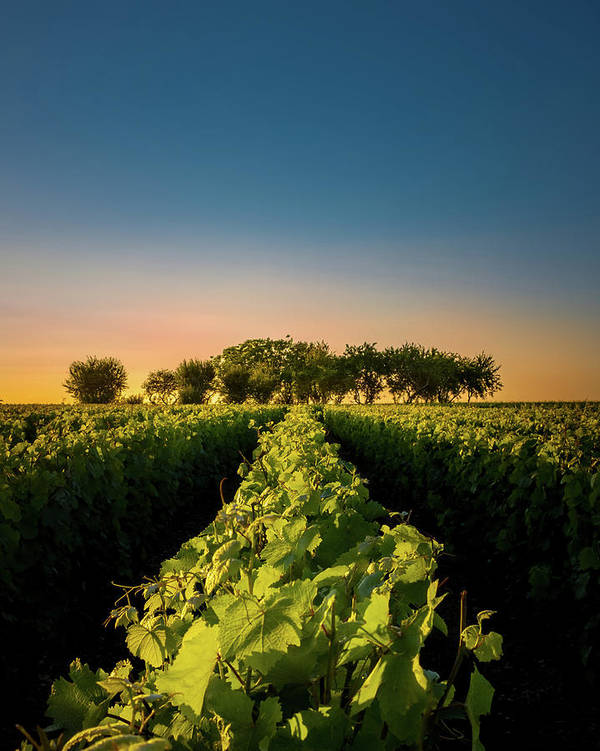 France Poster featuring the photograph Vouvray Vineyard by Joseph Smith