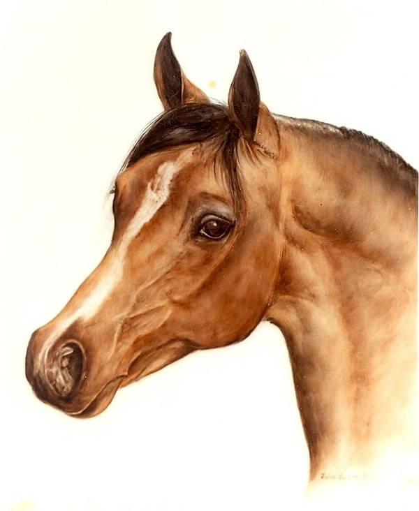 Horse Poster featuring the painting Arabian Horse Head Study by Julia Sweda