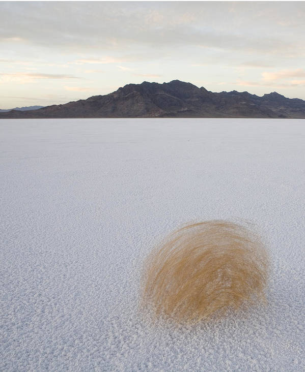 Outdoors Poster featuring the photograph Tumbleweed Spinning Over The Bonneville by John Burcham