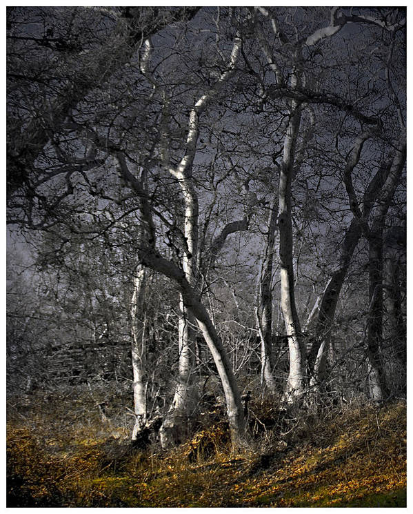 Landscape Poster featuring the photograph Sycamore Grove by Karen W Meyer