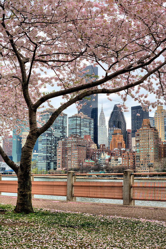 Nyc Poster featuring the photograph The Spring Skyline by JC Findley