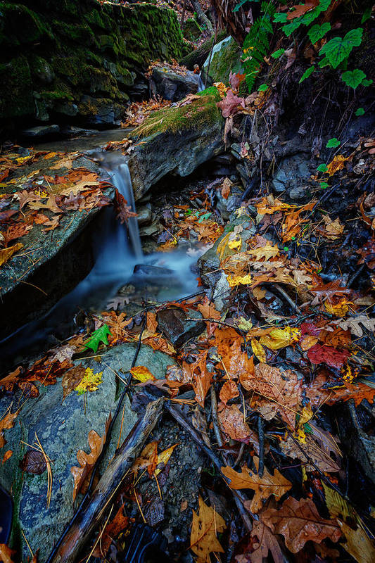 Autumn Poster featuring the photograph Autumn At A Mountain Stream by Rick Berk
