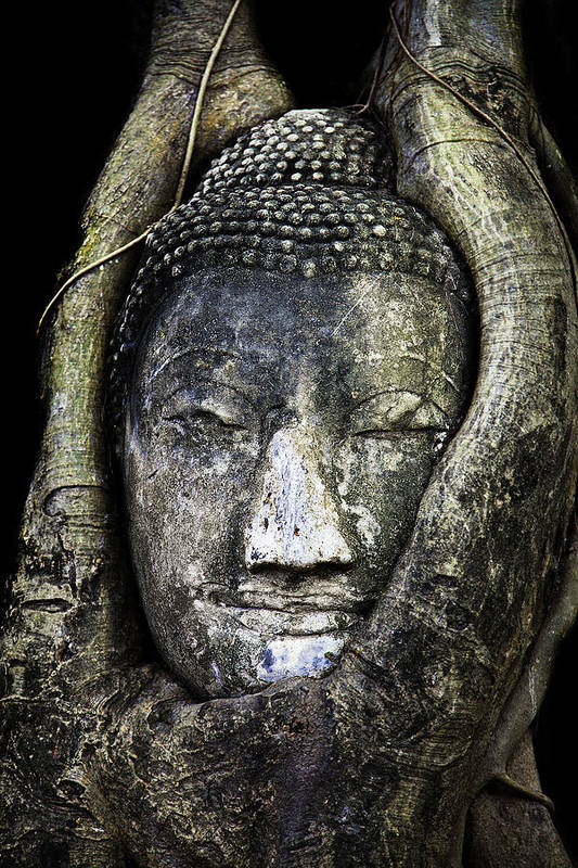 Ayutthaya Poster featuring the photograph Buddha Head In Banyan Tree by Adrian Evans