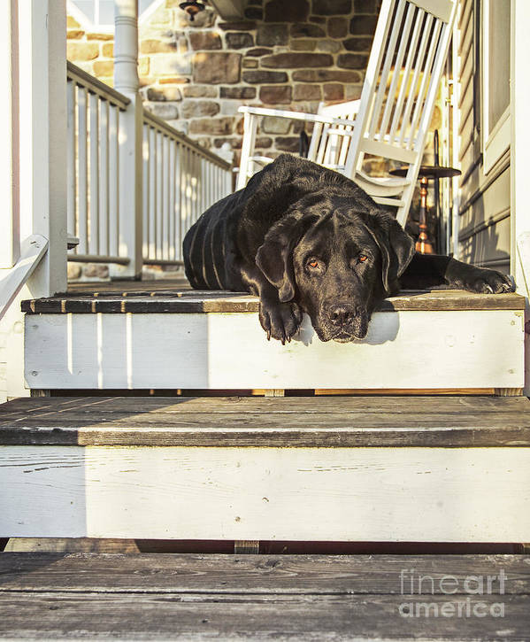 Dog Poster featuring the photograph Old Porch Dog by Diane Diederich
