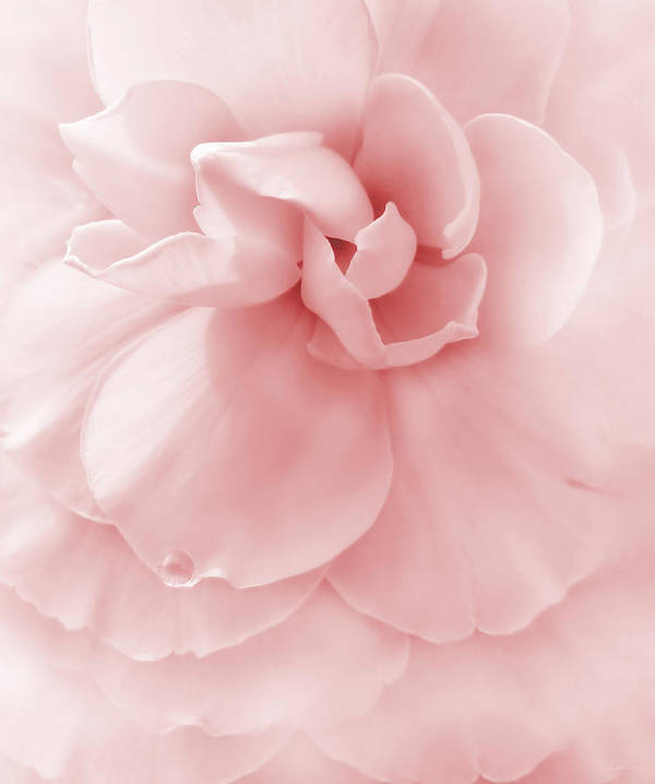 Begonia Poster featuring the photograph Pink Ruffled Begonia Flower by Jennie Marie Schell
