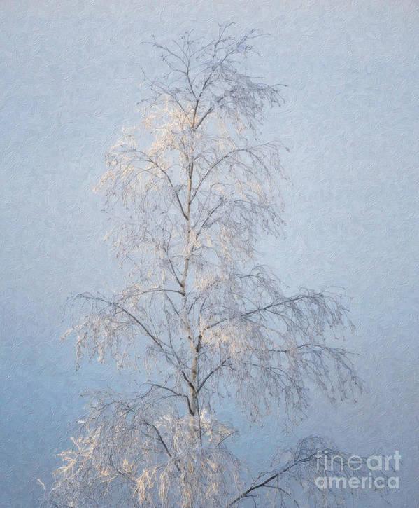 Slender Poster featuring the digital art Lone And Slender by Ari Salmela