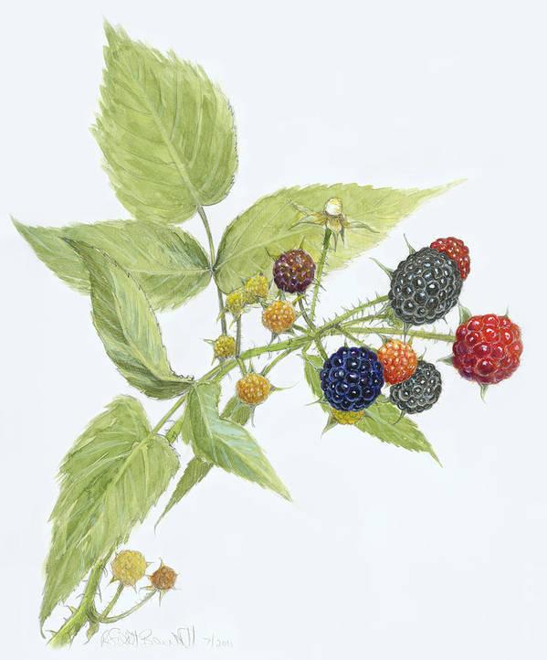 Blackberries Poster featuring the painting Black Raspberries by Scott Bennett