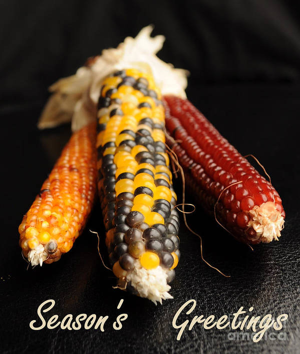Holiday Poster featuring the photograph Season's Greetings- Thanksgiving Card No. 1 by Luke Moore