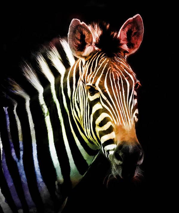 Zebra Poster featuring the photograph Rainbow Zebra by Athena Mckinzie