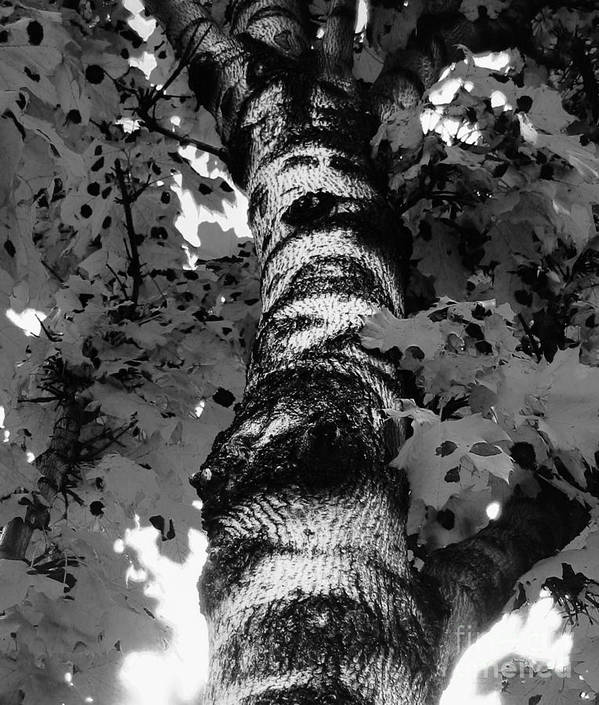 Tree Poster featuring the photograph The Tree by Reb Frost