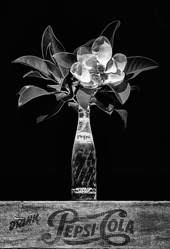 Pepsi Poster featuring the photograph The Magnolia And Pepsi Still Life Black And White by JC Findley