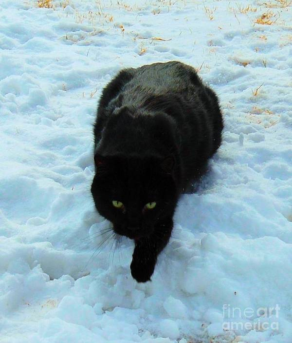 Cat Poster featuring the photograph A Small Panther In The Snow by Cheryl Poland