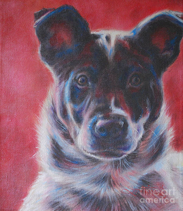 Blue Heeler Poster featuring the painting Blue Merle On Red by Kimberly Santini