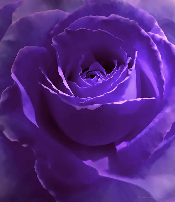 Rose Poster featuring the photograph Dark Secrets Purple Rose by Jennie Marie Schell