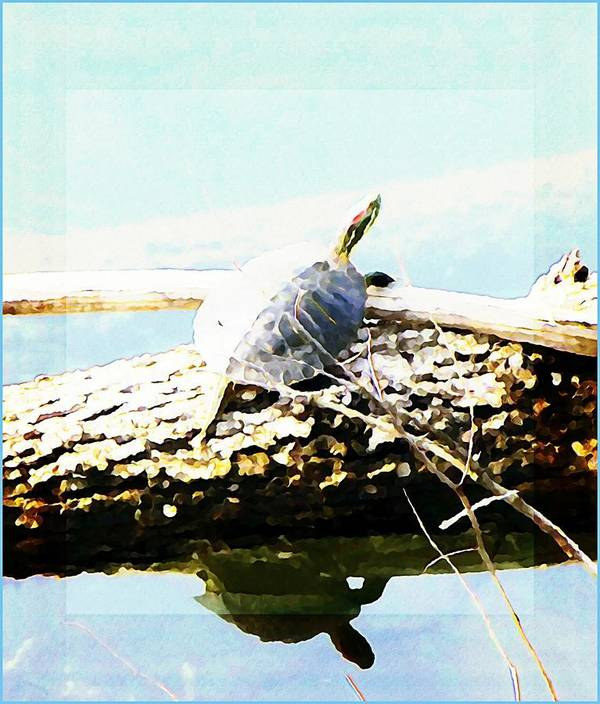 Turtle Poster featuring the photograph Sitting Pretty by Mindy Newman
