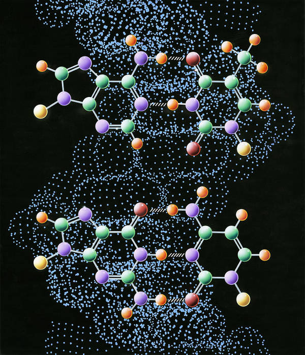 Dna Poster featuring the photograph Dna Molecule by John Bavosi