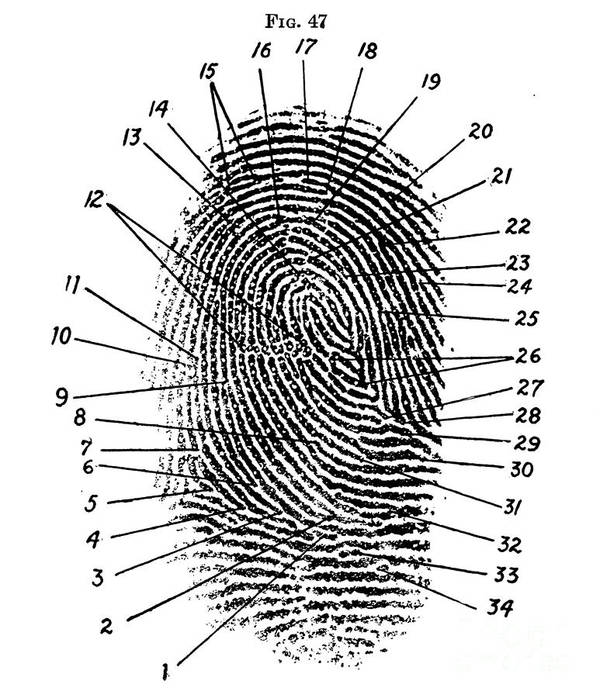 Science Poster featuring the photograph Fingerprint Diagram, 1940 by Science Source