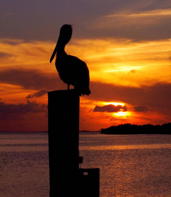 Sunsets Poster featuring the photograph Pelican Sundown by Karen Wiles