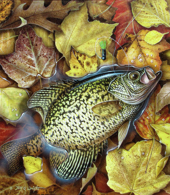 Jon Q Wright Fish Fishing Crappie Panfish Fall Leaves Angling Lure Tackle Jig Poster featuring the painting Fall Crappie by JQ Licensing