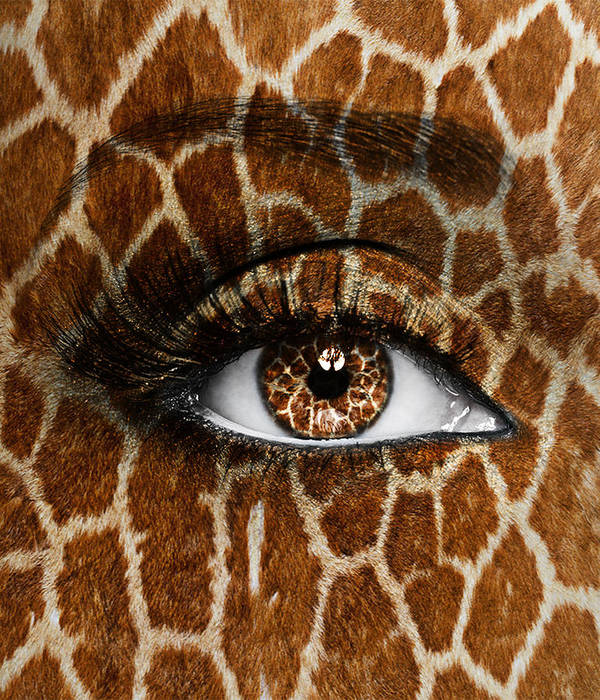 Giraffe Poster featuring the photograph Giraffe by Yosi Cupano