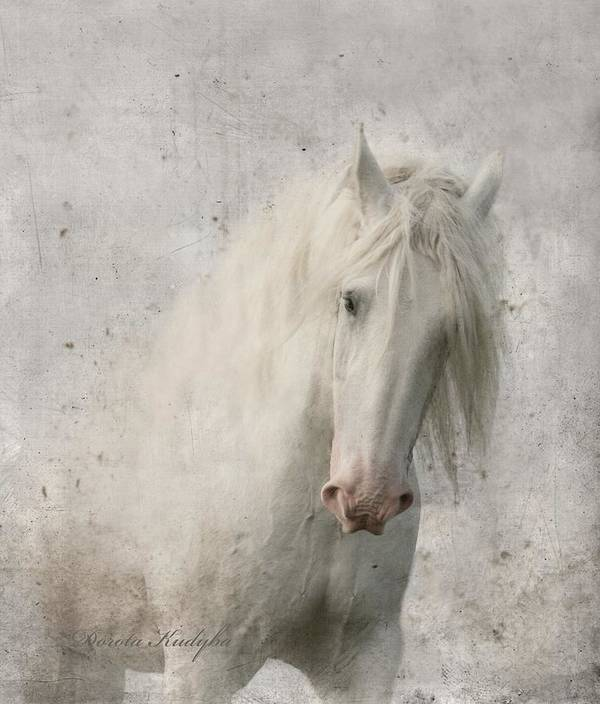 White Horse Poster featuring the photograph Kindness by Dorota Kudyba