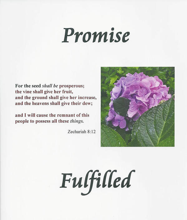 For The Seed Shall Be Prosperous; The Vine Shall Give Her Fruit Poster featuring the photograph Promise Fulfilled by Dennis Burton