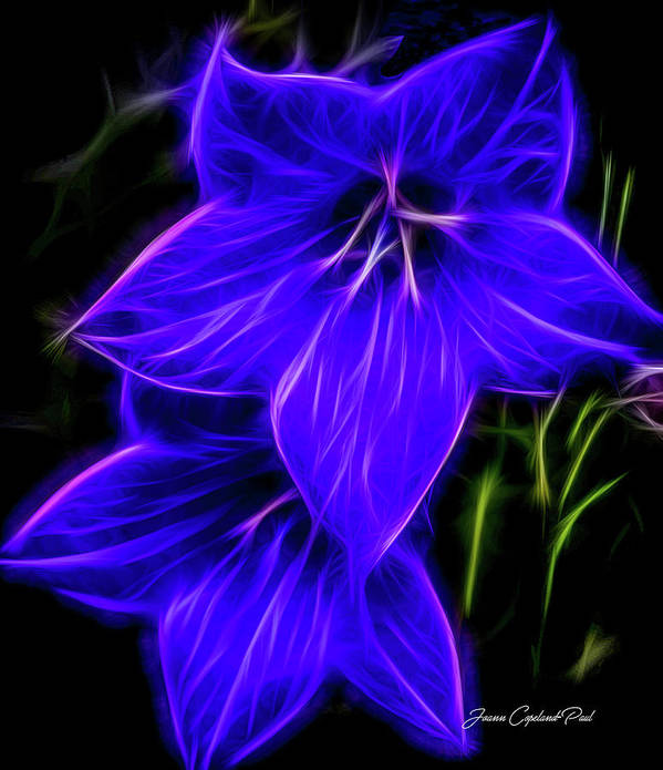 Purple Balloon Flower Poster featuring the photograph Purple Passion by Joann Copeland-Paul