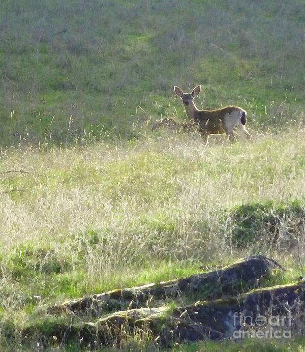 Deer Poster featuring the photograph Quiet Neighbor by JoAnn SkyWatcher