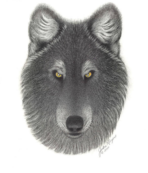 Wolf Poster featuring the drawing Stepinwolf by Jackie Meyers