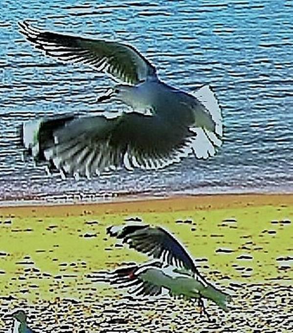 Blair Stuart Poster featuring the photograph Sea Gulls In Flight by Blair Stuart