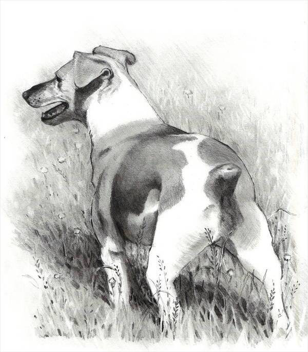 Dog Poster featuring the drawing Jack Russell Terrier by Joyce Geleynse
