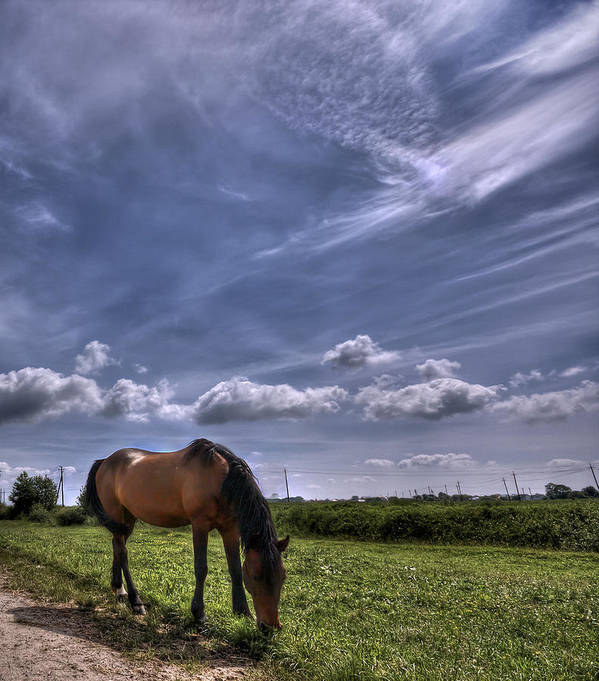 Cloud Poster featuring the photograph Sweet Country Scents by Evelina Kremsdorf