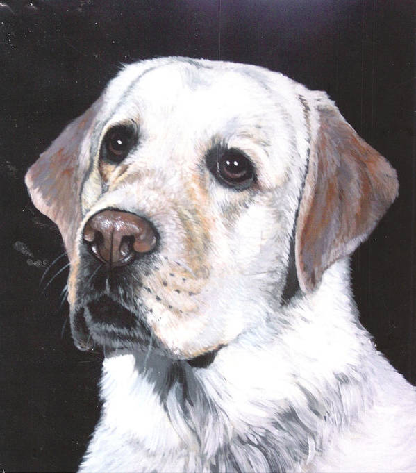 Pet Portrait Poster featuring the painting Retriever by Steve Greco
