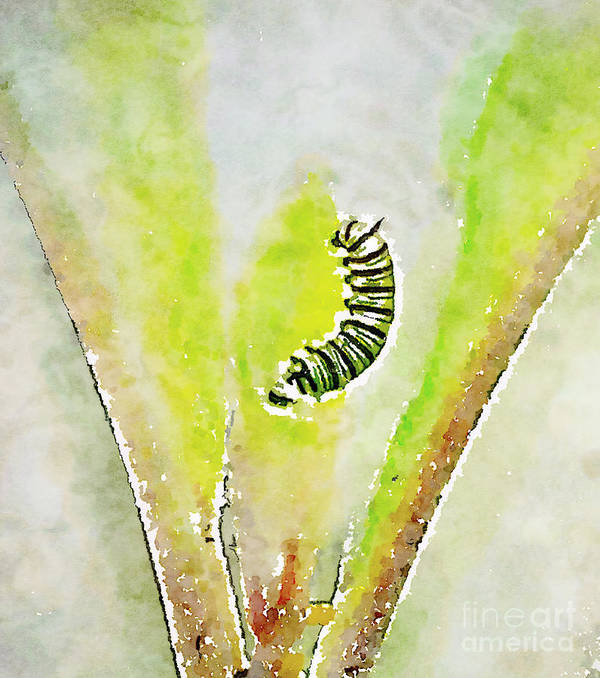 Monarch Caterpillar Poster featuring the photograph Monarch Caterpillar - Digital Watercolor by Kerri Farley