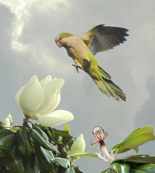 Blossom Poster featuring the digital art Parrot And Magnolia Tree by IM Spadecaller