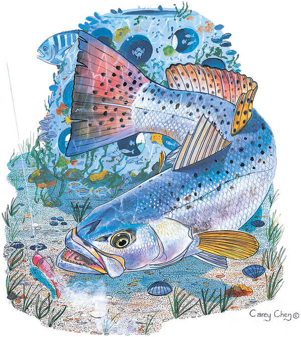 Trout Poster featuring the painting Sea Trout Wreck by Carey Chen