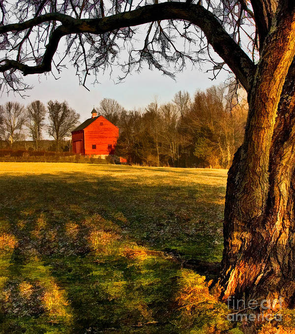 Country Poster featuring the photograph Country Life by Susan Candelario