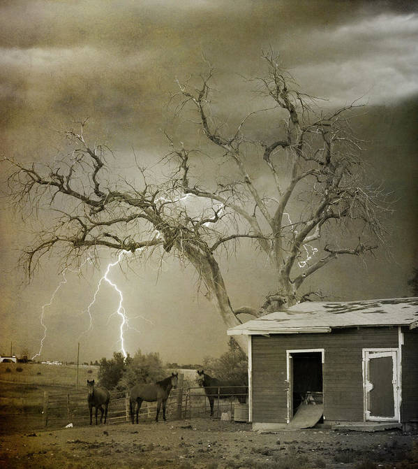 Country Poster featuring the photograph Country Horses Lightning Storm Ne Boulder Co 66v Bw Art by James BO Insogna