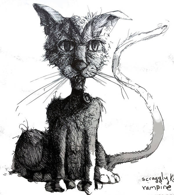 Cats Poster featuring the drawing Scraggly Vampire Kiittie by Neal Cormier