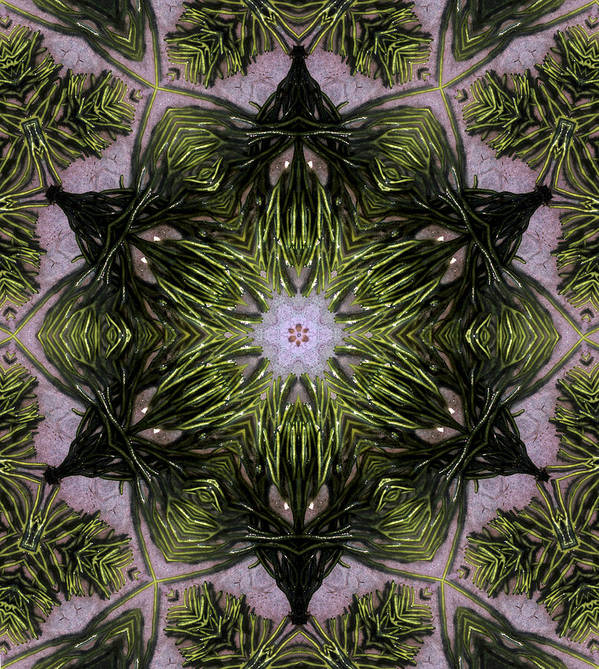 Mandala Poster featuring the digital art Mandala Sea Sponge by Nancy Griswold