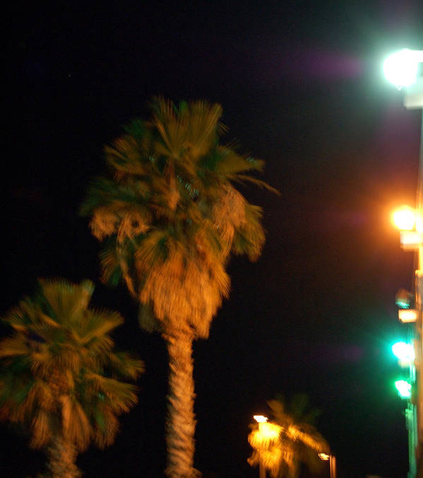 Palm Tress Poster featuring the photograph Palm Tree Glow by Heather S Huston