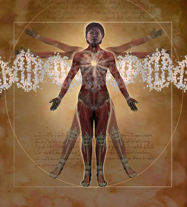Illustration Poster featuring the digital art New Vitruvian Woman by Jim Dowdalls and Photo Researchers