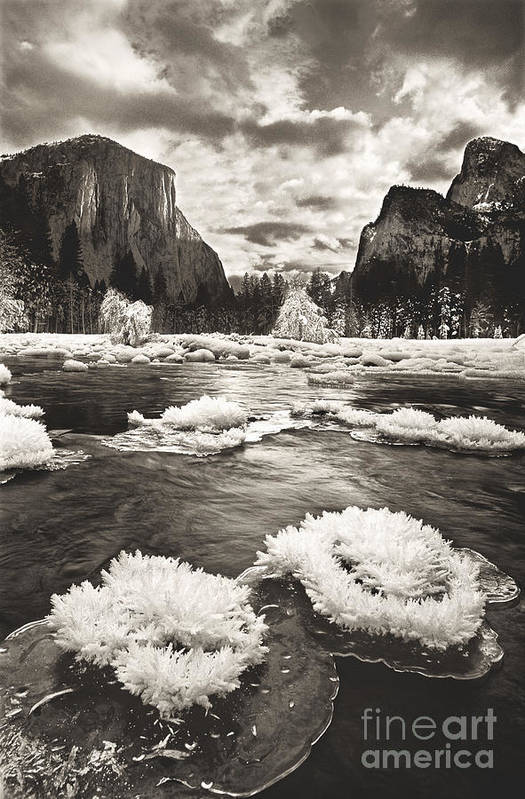North America Poster featuring the photograph Rime Ice On The Merced In Black And White by Dave Welling