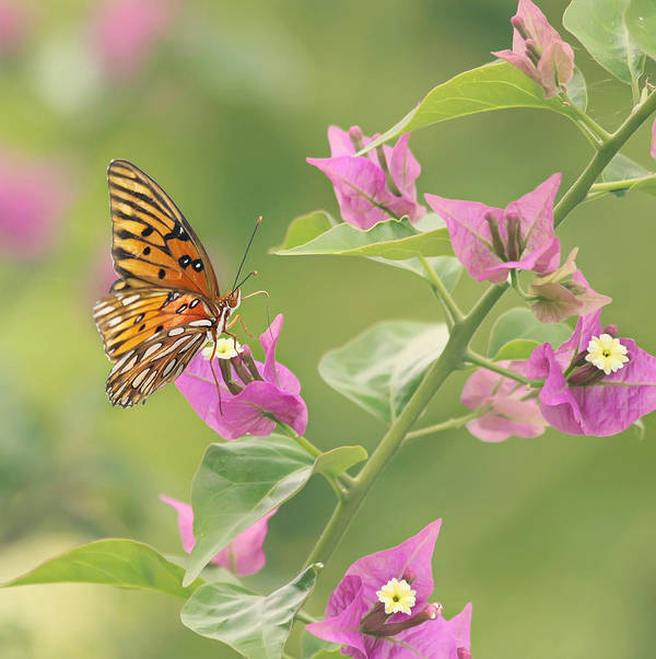 Butterfly Poster featuring the photograph Chance Encounter by Kim Hojnacki