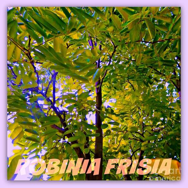 Robinia Poster featuring the digital art Robinia Frisia by Meiers Daniel