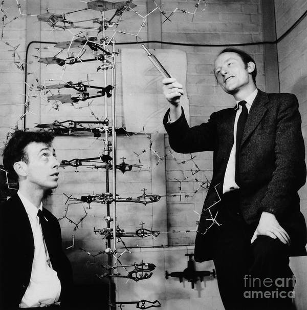 Watson Poster featuring the photograph Watson And Crick With Dna Model by A Barrington Brown