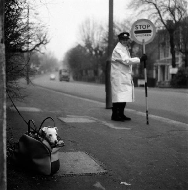 Adults Only Poster featuring the photograph Bag Dog by Jim Witts