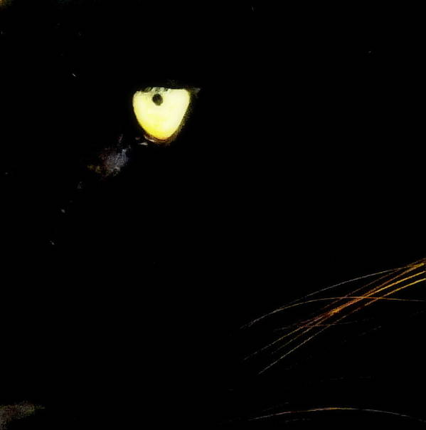 Black Panther Poster featuring the photograph Eye Of The Panther by Karen Wiles
