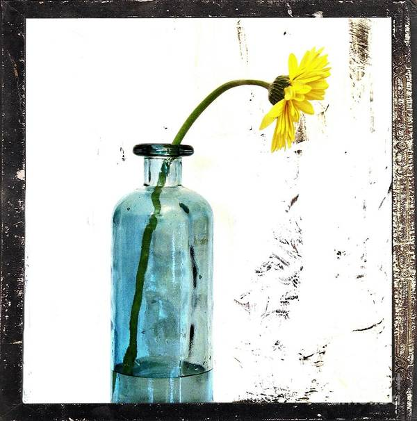 Photo Poster featuring the photograph Shabbi Chic Daisy by Marsha Heiken