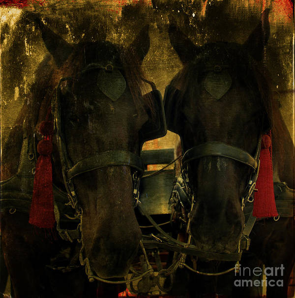Spanish Carriage Horses Poster featuring the photograph Spanish Carriage Horses by Lee Dos Santos